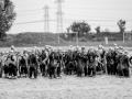 0810 20160924 Triatlon Milligerplas Zwolle_GJR0810 export ZW A